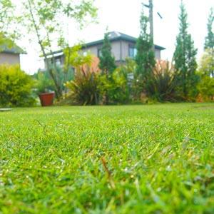 芝生の手入れと育て方|芝生ガーデニング